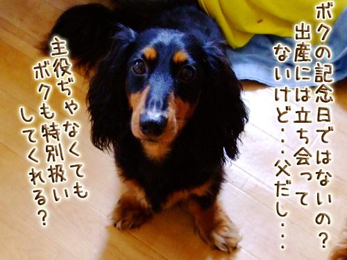 20080719_02--006.jpg
