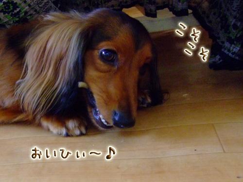 20080719_02--019.jpg