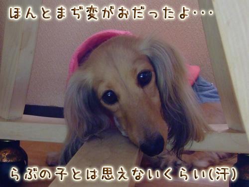 20080719_02--026.jpg