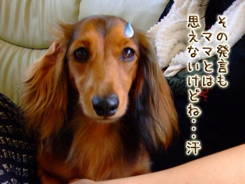 20080719_02--027.jpg