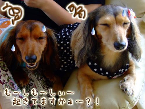 20080719_02--032.jpg