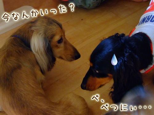 20080719_02--038.jpg