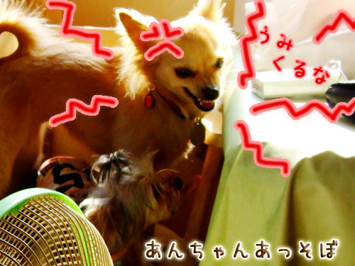 20080719_02--039.jpg