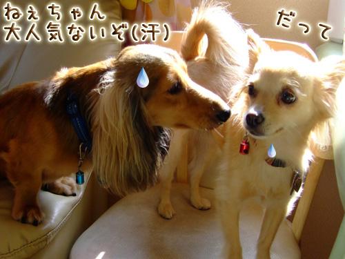 20080719_02--043.jpg