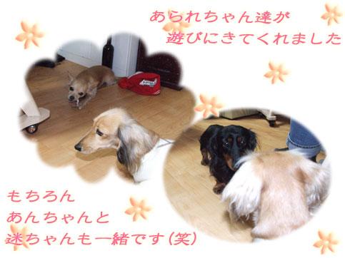 あんちゃん&迷ちゃん登場!!