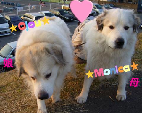 モニカ&お嬢★