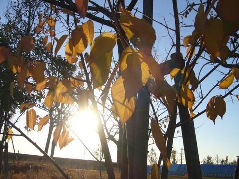 枯れ木のからもれる太陽の光