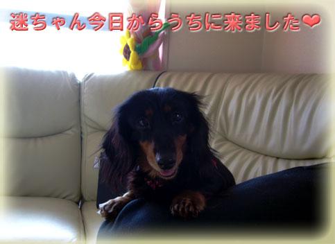 P1030687.jpg