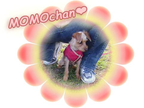 MOMOchan♪