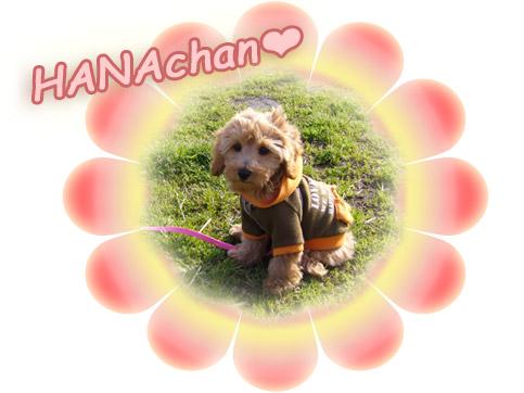 HANAchan♪