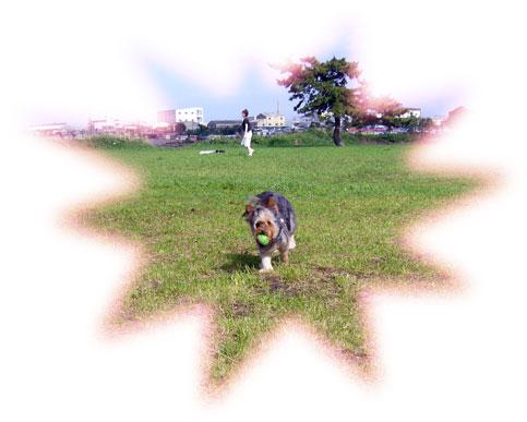 モアちゃん走る♪