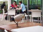 ibisってやつらしい。