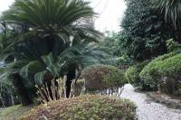 お庭の景色