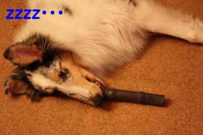 遊びながら熟睡中