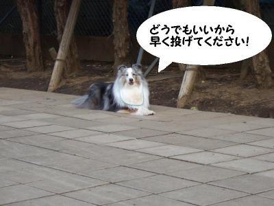 しつこすぎる犬