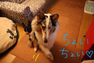 お手…犬♪♪♪