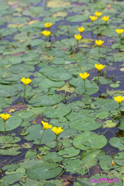 水辺の小花たち