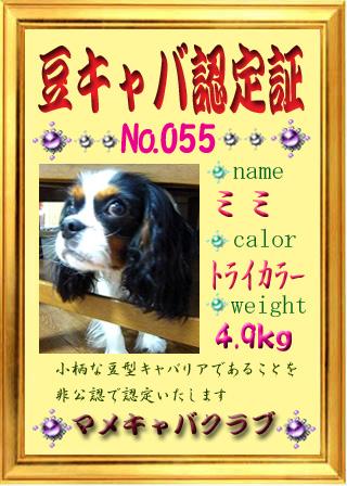 41_2.jpg