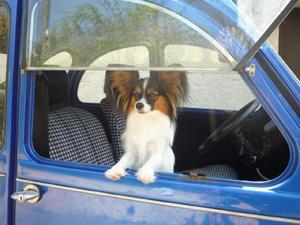 Julia_in_the_car[1]