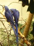 bird_couple2