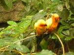 bird_couple