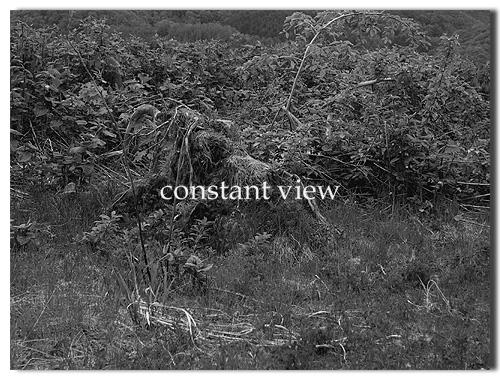 A WOODEN ELEPHANT