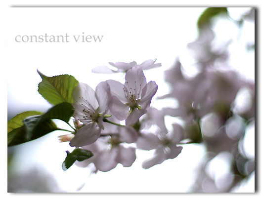 SUITE 3  「 MUSIC FROM CHERRYBLOSSOM  」