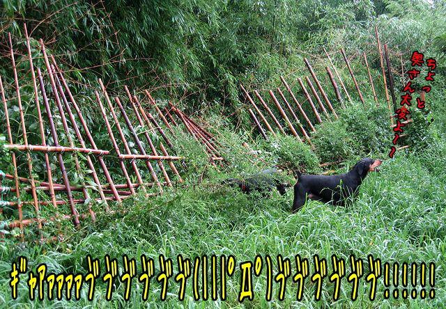 magonbaka4.jpg