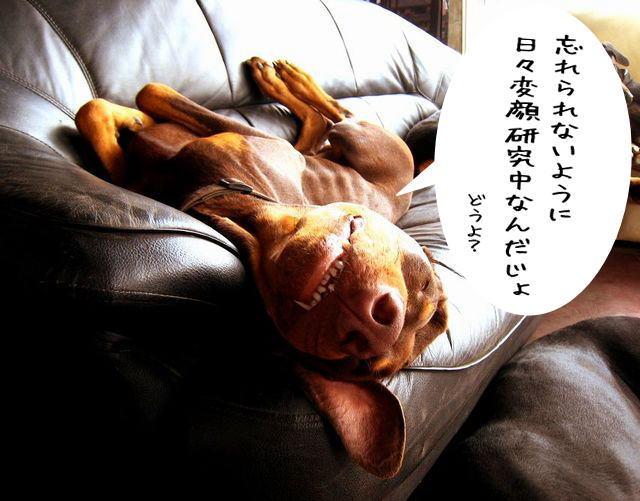 akizyunbi5.jpg