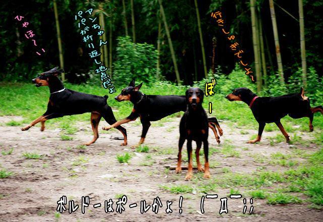 harumusume2.jpg