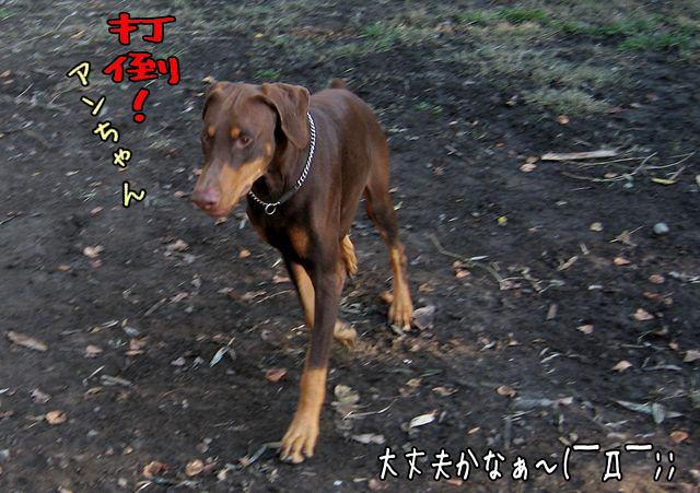 kenkakika3.jpg