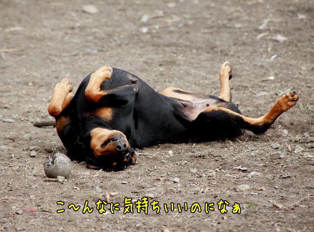 kimotiyoi1.jpg