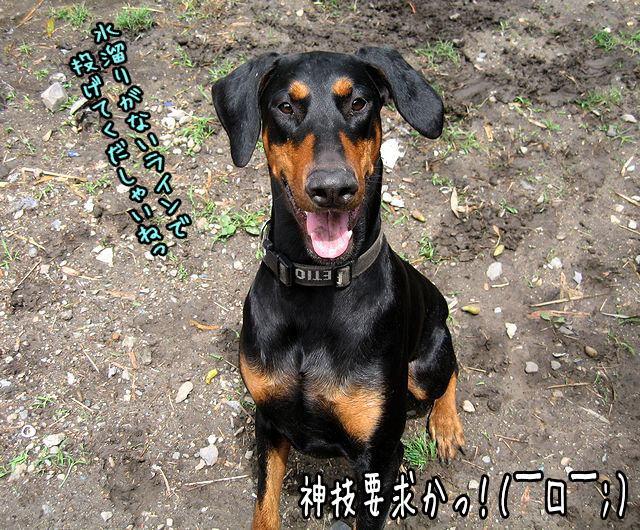 mizutamariyada3.jpg