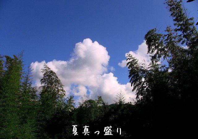 nakayokusuzumu4.jpg