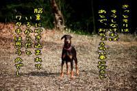 okinaiani4.jpg