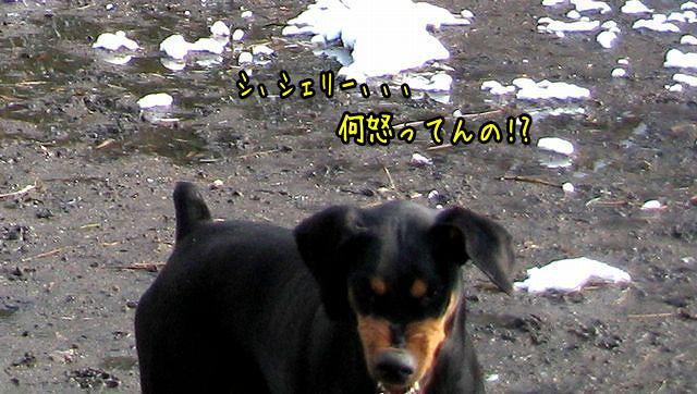 yukiokoru2.jpg