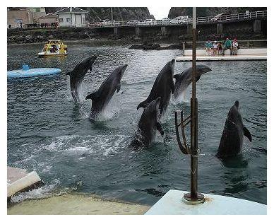 イルカのショー♪