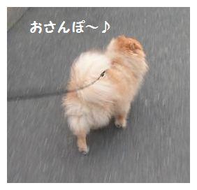 おさんぽ~♪