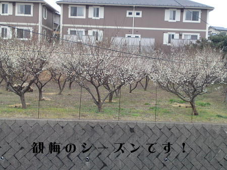 10030201_1.jpg