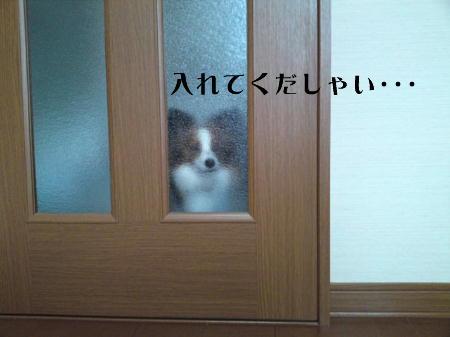 10051501_1.jpg