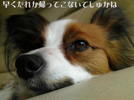 10051805_1.jpg