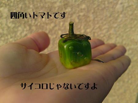 10061204_1.jpg