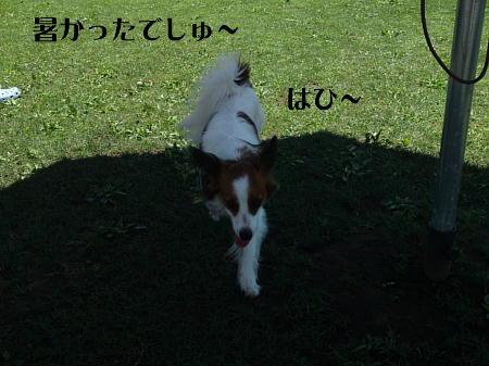 10071904_1.jpg