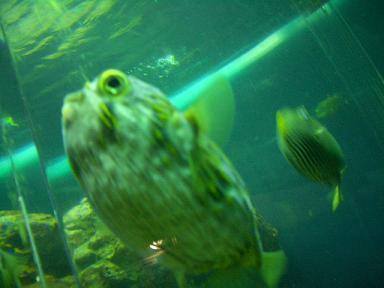水族館その1