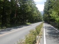 ハリモミ樹林