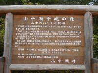 ハリモミ純林