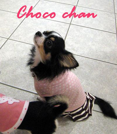 chiwachoco.jpg