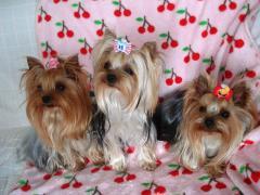 今日の3人娘