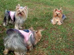 公園で3人娘