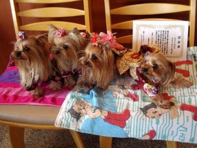 成犬式4人娘